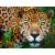 TGZ-Tour Cascada de Agua Azul, Cascada de Misolha y Zona Arqueologica de Palenque - TGZ